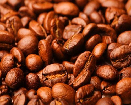 kopi luwak murah